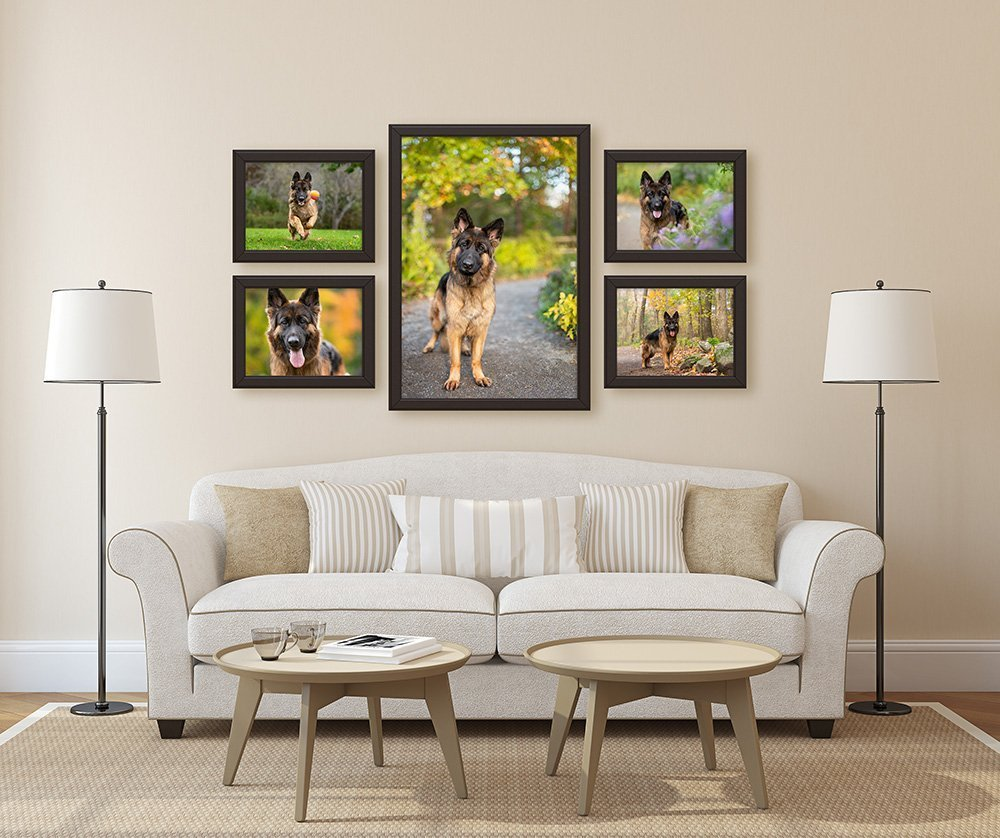 Five framed canvases of a German Shepherd dog hanging on the wall in a living room