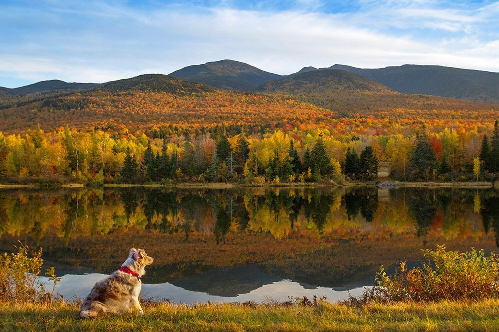 Dog sitting by a pond in front of the mountains