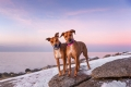 Two dogs standing together in front of a pink sunset
