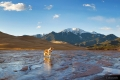 dog standing in the creek at Great Sand Dunes National Park