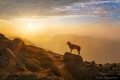 Dog standing on the rocks on top of a mountain at sunrise