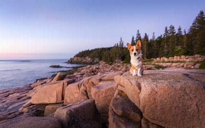 Aesop in Acadia National Park