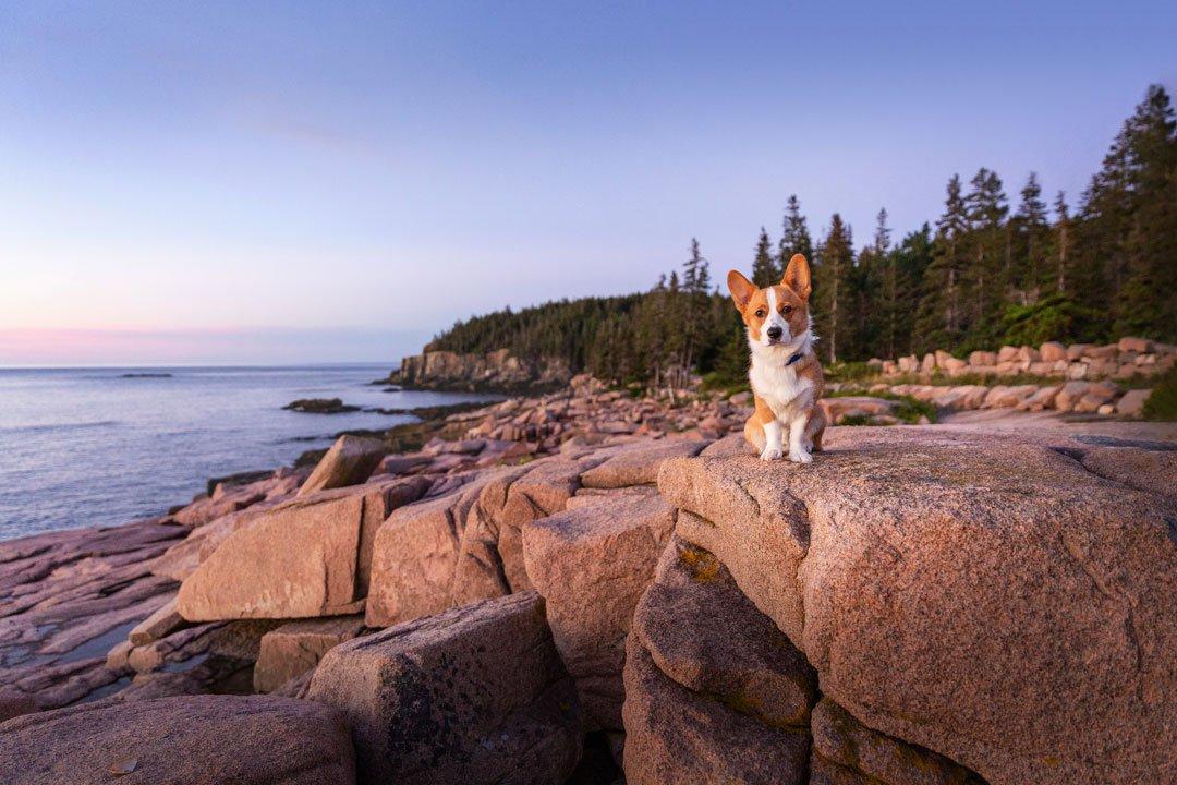 dog photographed at Acadia National Park