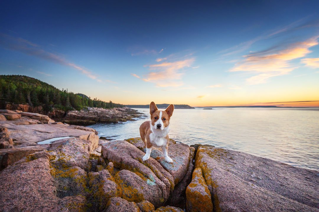 Cute puppy standing in front of a beautiful sunrise