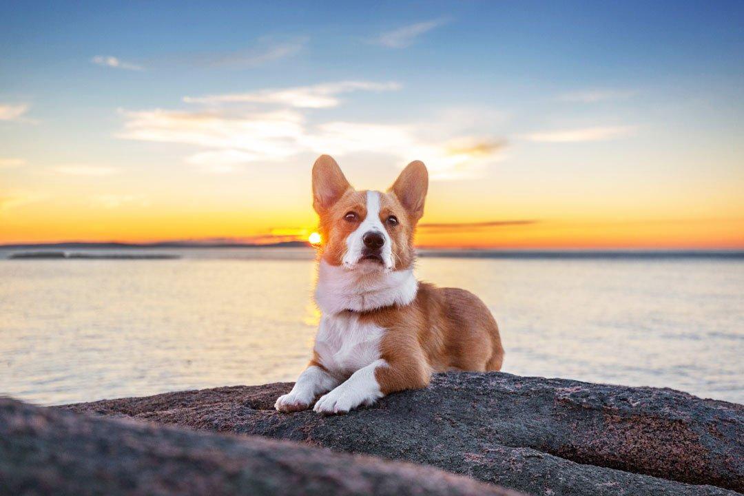 Adorable dog photograph