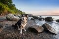 Dog sitting on a beach in Rhode Island