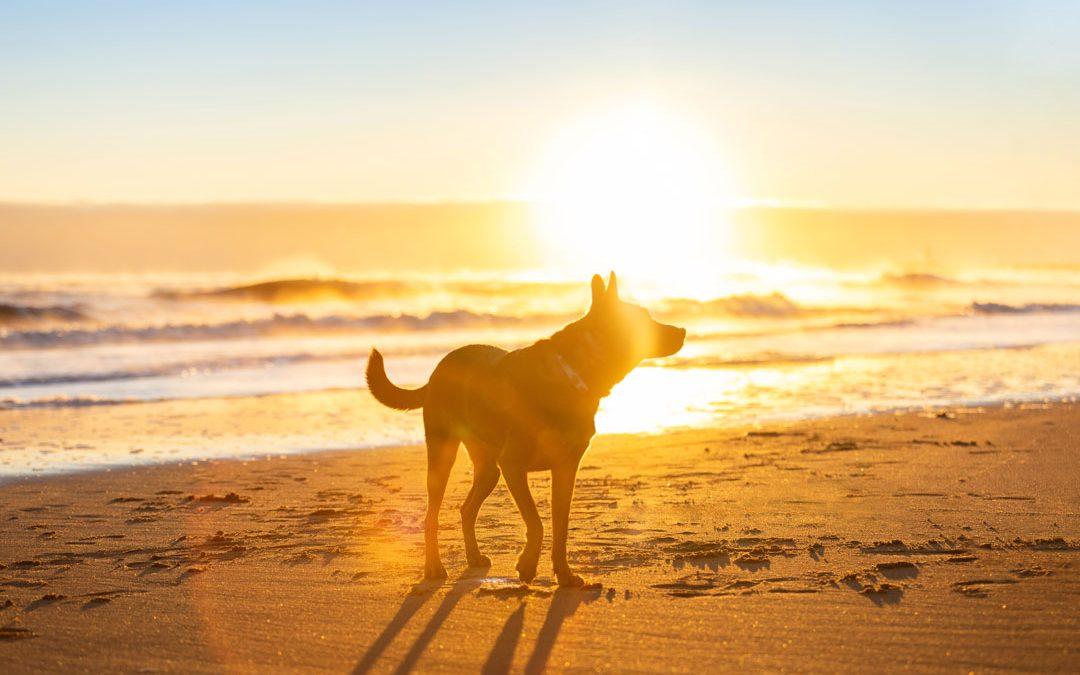 Ocean Sunrise with Hina