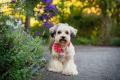 fluffy dog standing in a flower garden