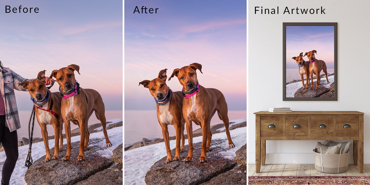 Professional pet photos showing how leashes are edited out