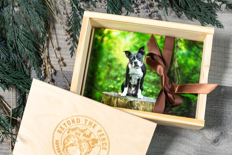 printed pet photographs in a wooden box