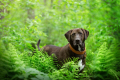 Mixed breed dog standing in the ferns