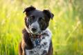 cute dog in a grassy field