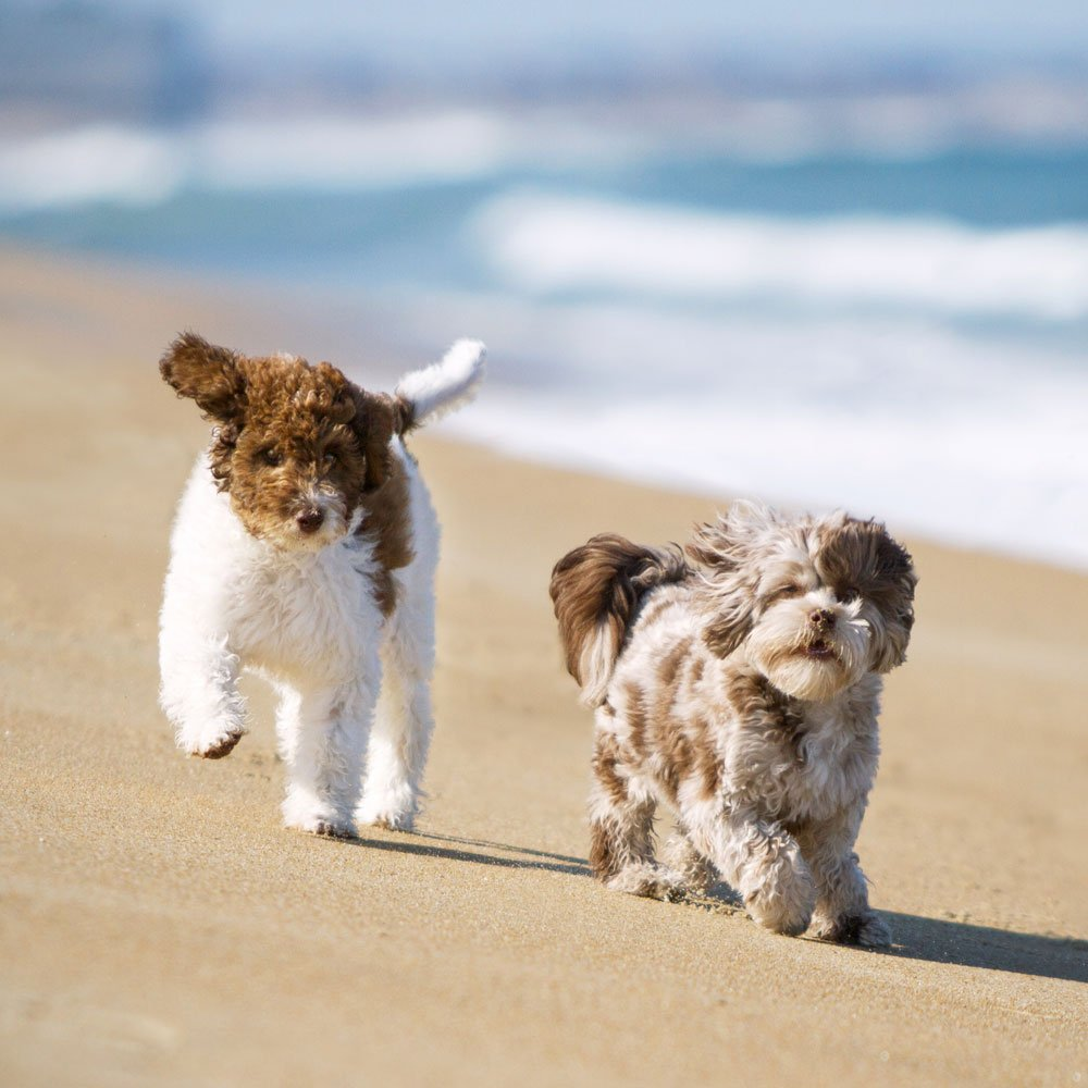 two puppies running on the beach