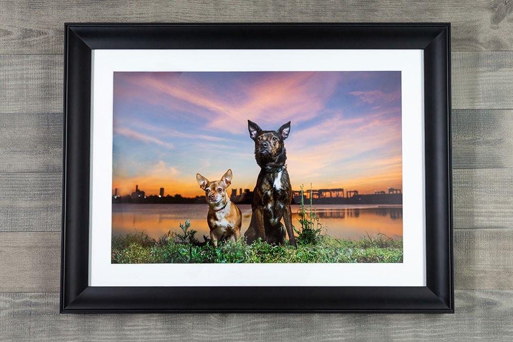 custom framed print of two dogs