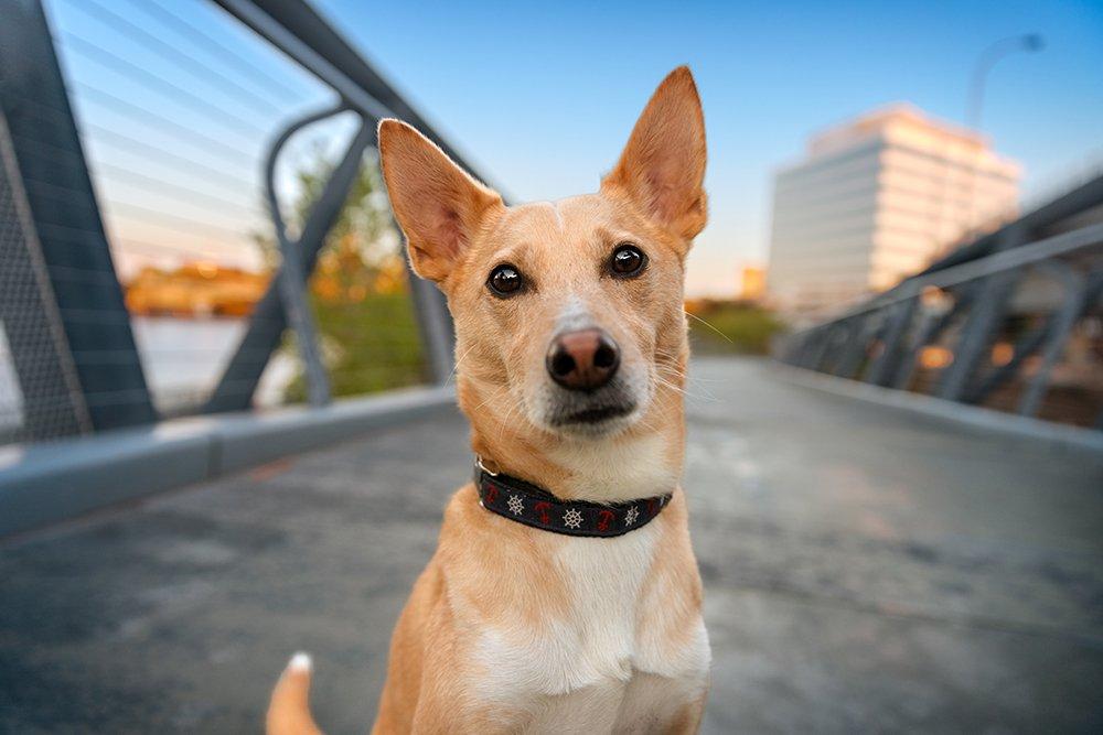 Portrait photograph of a dog