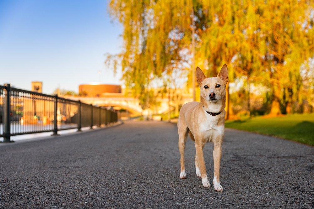 dog walking through a park in downtown Boston