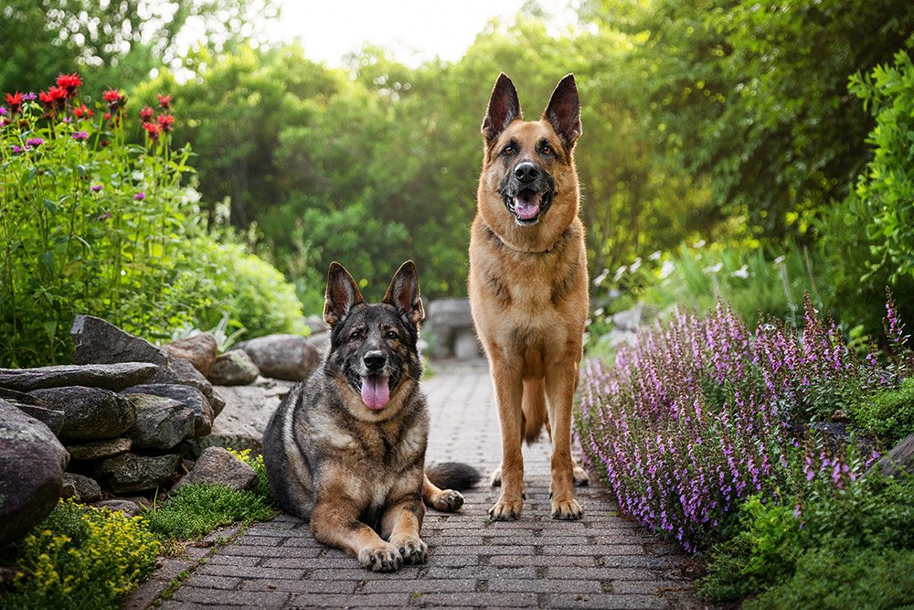 two dogs together in a flower garden