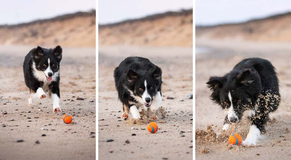 Dog chasing a ball on the beach