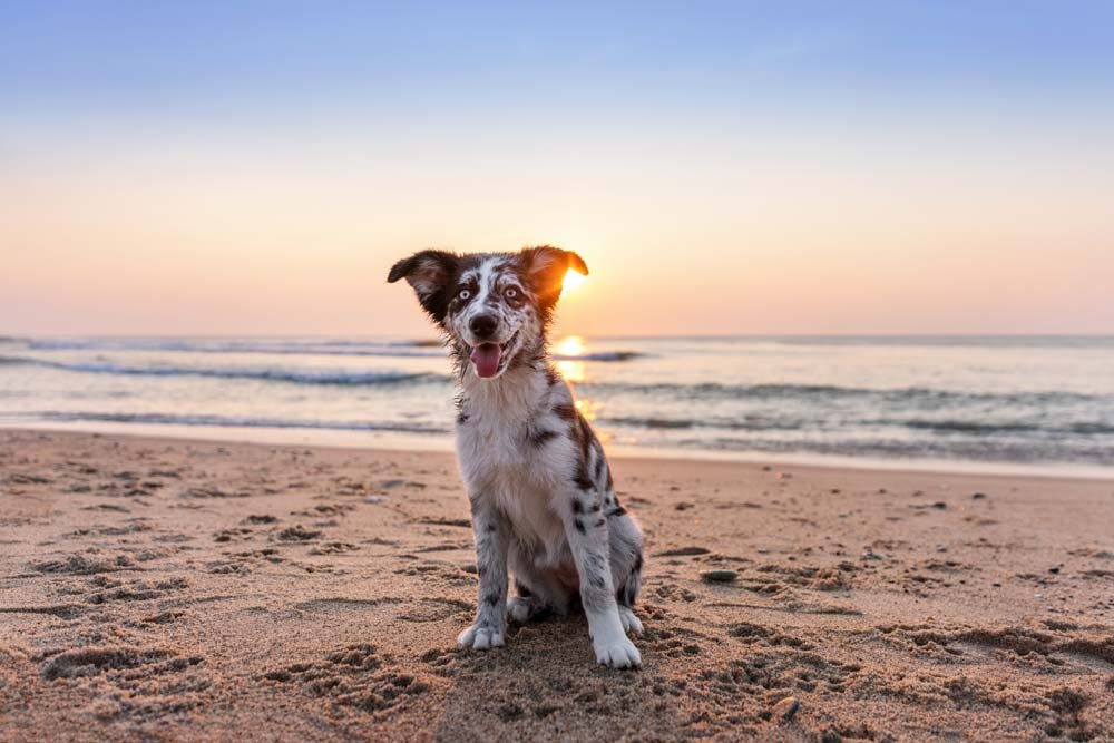 Puppy sitting with the sunrise behind her
